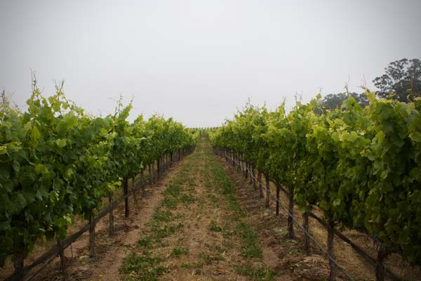 Solomon Hills Vineyard